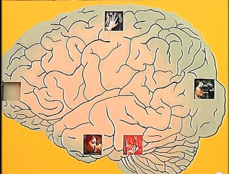 Cerveau  et mémoire des sens